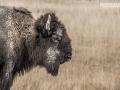 Yellowstone-National Park (c) Christian Pfanzelt