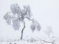 Der mehrfach preisgekrönte Naturfotograf Theo Bosboom präsentiert 'Winter im Hohen Venn' www.theobosboom.nl