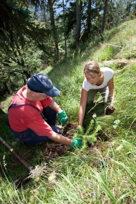 Im Rahmen der Aktion Schutzwald werden neue Bäume gepflanzt. (c) DAV/Marco Kost